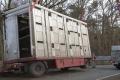 2018-02-06 10517 Goldenstedt Schweinetransporter (NWM-TV) 19