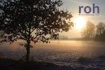 roh-18122010-27