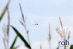roh-27_08_2012-2222